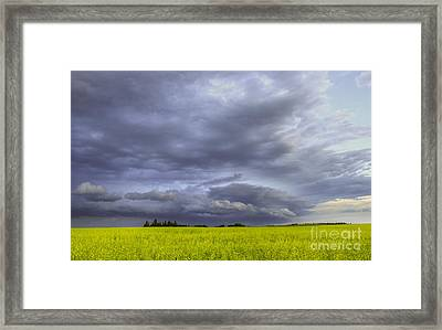 Canola And Storm Framed Print by Dan Jurak