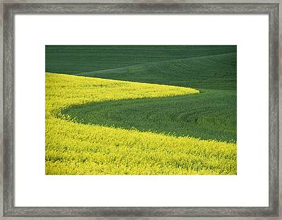 Canola And Wheat Framed Print by Latah Trail Foundation