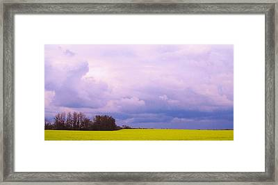 Canola Field Framed Print by Cathy Long