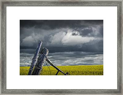 Canola Field In Southern Alberta Framed Print