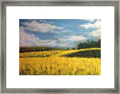 Canola Fields In Rimbey Alberta Framed Print by Fiona Graham