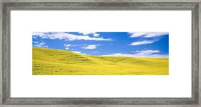 Canola Fields, Washington State, Usa Framed Print