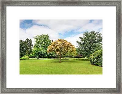 Canon Hill Park, Birmingham, England, Uk Framed Print by Chris Hepburn
