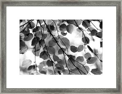 Canopy Framed Print by Aaron Aldrich