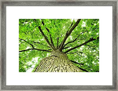 Canopy Framed Print by Greg Fortier