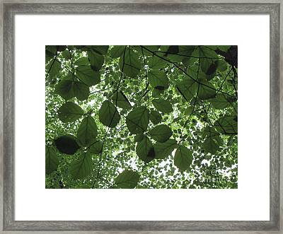 Canopy In Green 3 Framed Print by Melissa Stoudt