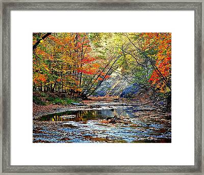 Canopy Of Color Iv Framed Print by Frozen in Time Fine Art Photography