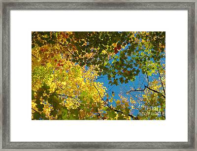 Canopy Of Colors Framed Print by Kathleen Struckle