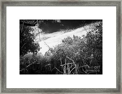 Canopy Of The Mangrove Forest In The Florida Everglades Usa Framed Print