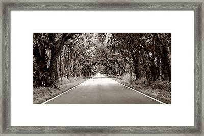 Canopy Of Trees Framed Print
