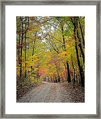 Canopy Of Yellow Framed Print by Marty Koch