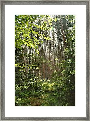 Canopy Framed Print by RJ Martens