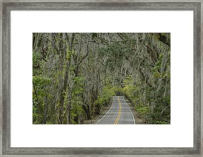 Canopy Road Framed Print by Christian Heeb