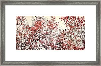 canopy trees II Framed Print