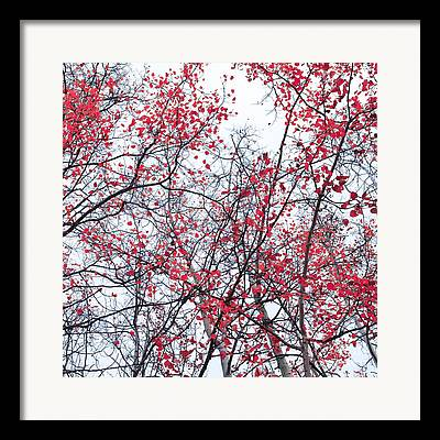 Red Leavies Framed Prints