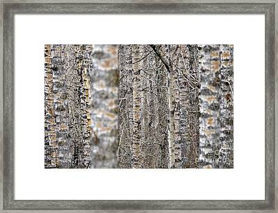 Can't See The Wood For The Trees Framed Print