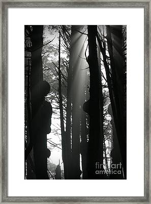 Can't See...the Forest For The Trees Framed Print