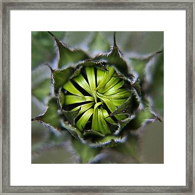 Can't Wait For My #sunflowers To Open! Framed Print