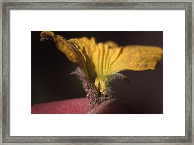 Cantaloupe Flower Framed Print by Retro Images Archive
