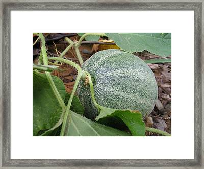 Cantaloupe  Framed Print by Jennifer Wheatley Wolf