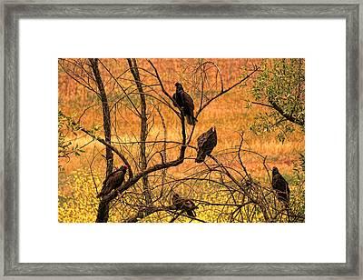 Canyon Dwellers Framed Print by Joe Bledsoe