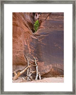 Canyon Ladder Framed Print