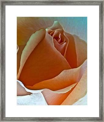 Canyon Rose Framed Print by Art Barker