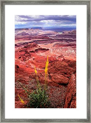 Canyonlands National Park Framed Print by Bonnie Fink