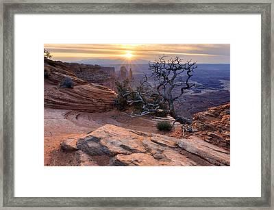 Canyonlands Sunrise Landscape With Dry Tree Framed Print by Yevgen Timashov