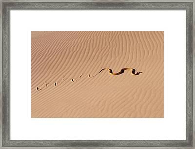 Cape Cobra Framed Print