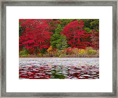 Framed Print featuring the photograph Cape Cod Autumn by Dianne Cowen