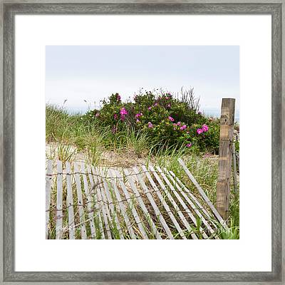Cape Cod Beach Roses Framed Print by Michelle Wiarda