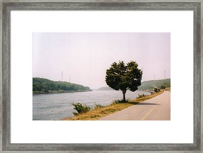 Cape Cod Canal And Tree Framed Print by David Fiske