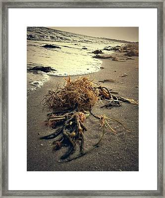 Cape Cod Framed Print by Conor Murphy