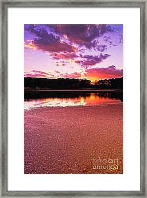 Cape Cod Cranberry Bog Sunset Framed Print