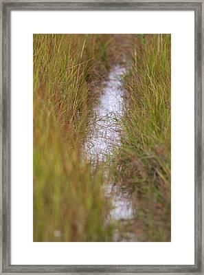 Cape Cod Marsh Framed Print by Allan Morrison