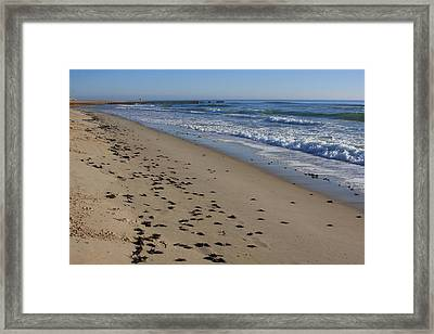 Cape Hatteras - Mermaid's Purse Laiden Beach Framed Print