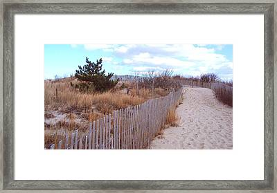 Cape Henlopen 6 Framed Print by Cynthia Harvey