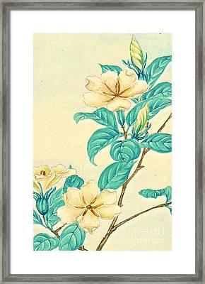 Cape Jasmine 1870 Framed Print