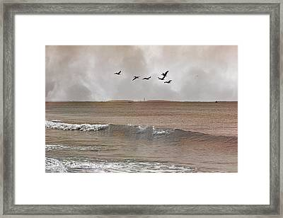 Cape Lookout Pelicans Framed Print by Betsy Knapp