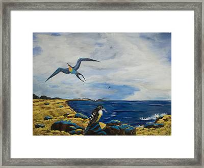 Cape May Gulls Framed Print