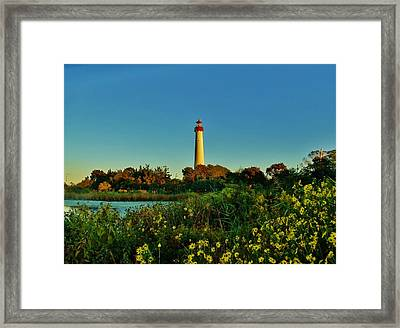 Cape May Lighthouse Above The Flowers Framed Print