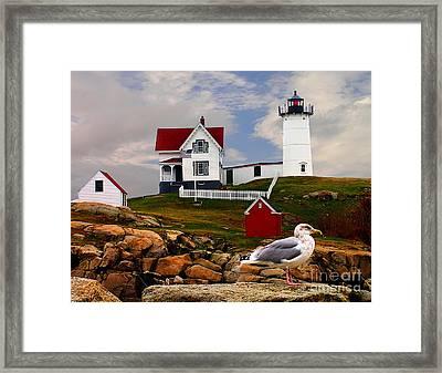 Cape Neddick Lighthouse Maine Framed Print by Nick Zelinsky