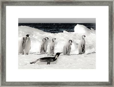 Cape Washington, Antarctica Framed Print