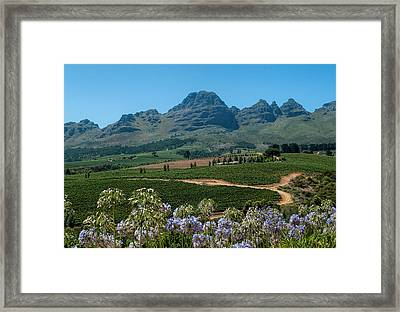 Cape Winelands - South Africa Framed Print by Photos By Pharos