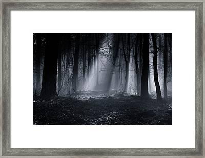 Capela Forest Framed Print