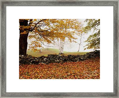 Caper Hill Birch Framed Print by Butch Lombardi