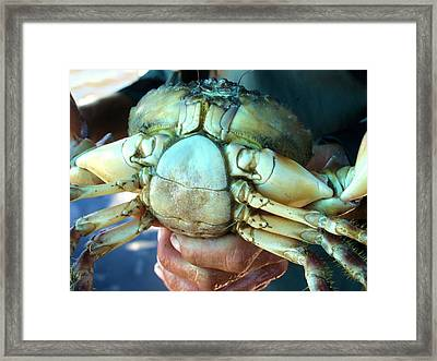 Framed Print featuring the painting Capers Crab by Lyn Calahorrano