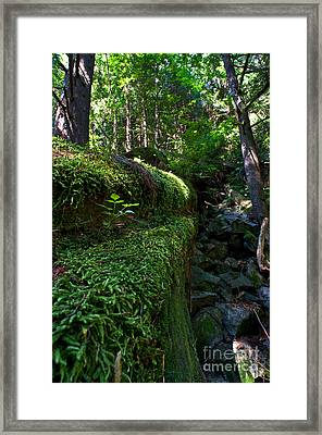 Capilano River Canyon 1 Framed Print by Terry Elniski