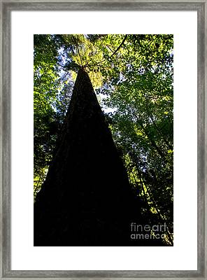 Capilano River Canyon 11 Framed Print by Terry Elniski